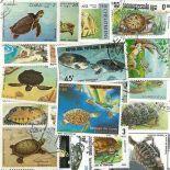 Collezione di francobolli tartarughe cancellati