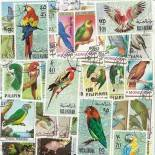 Stamp collection used Parrots