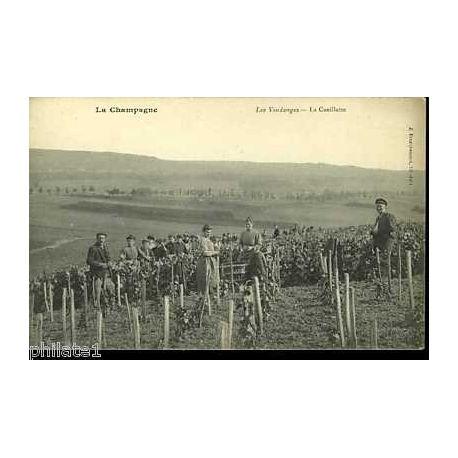 51 - La champagne - Les vendanges - La cueillette