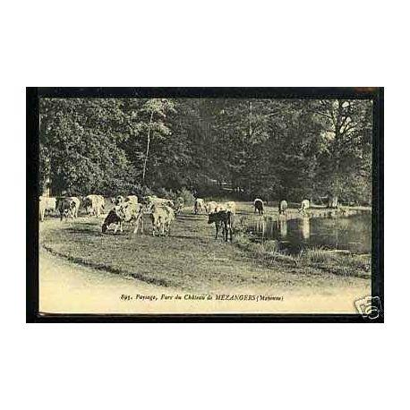 Carte postale 53 - Vaches au parc du chateau de Mezangers