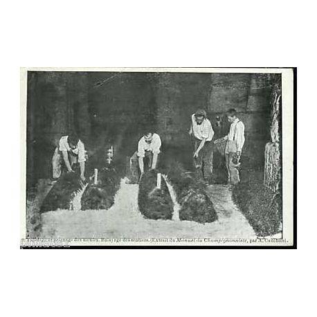 75 - Tapotage et peignage des meules Champignonniere