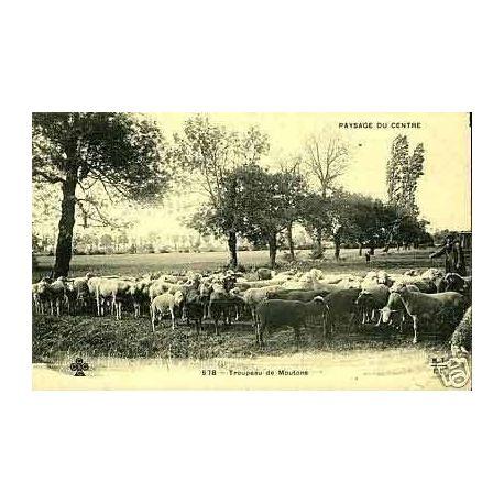 86 - Paysage du centre - Troupeau de Moutons