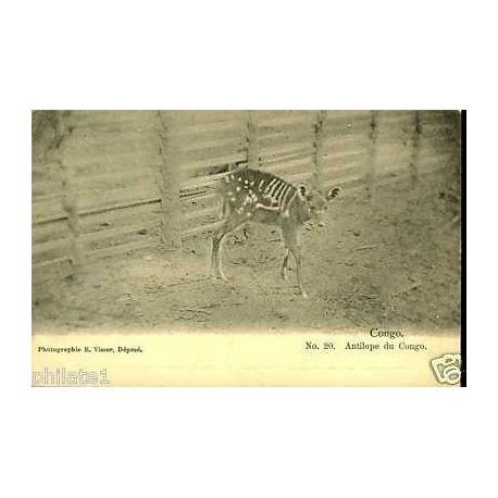 Congo - Antilope du Congo