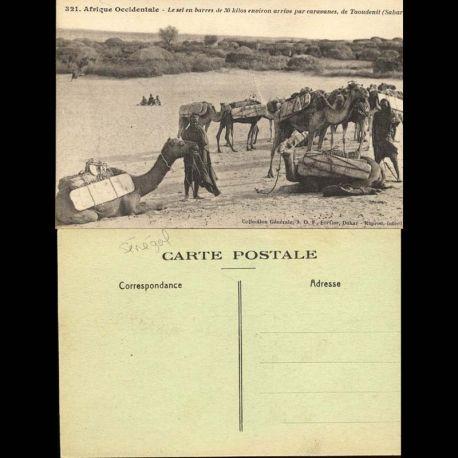 Senegal - Le sel en barres de 30 kilos environ arrive par caravanes, de Taoudenit - Beau plan anime