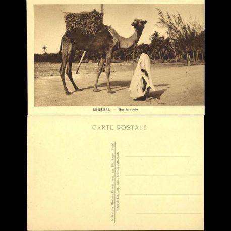 Senegal - Sur la Route - Chameau