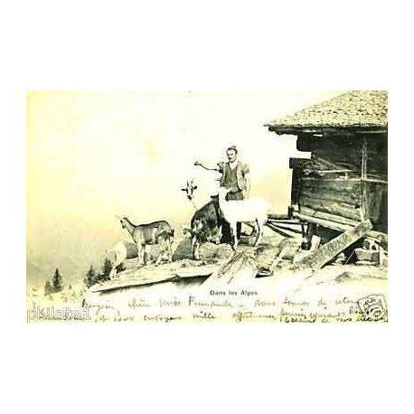 Dans les alpes - Chevrier et ses chevres