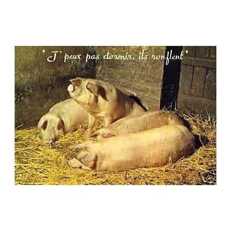 Les cochons - J'peux pas dormir ils ronflent !