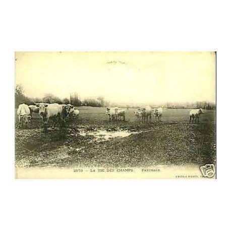 A la campagne - La vie des champs - Paturage