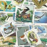 Collezione di francobolli anatre cancellate