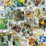Collezione di francobolli uccelli cancellati