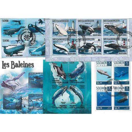 25 baleines